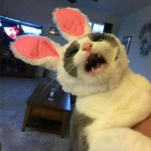 Create meme: funny cat , cat , cat with Bunny ears