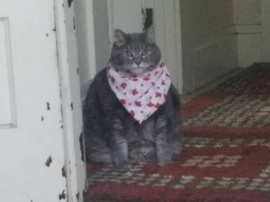 Create meme: cat , bring cherries meme cat, fat cat with scarf
