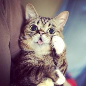 Создать мем: кот, смешные котики, смешные коты