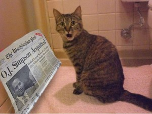 Create meme: cats , a cat with a newspaper, homeless cat