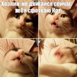 Create meme: memes templates , funny cat thoughts, cat selfie