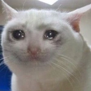 Create meme: sad crying cat meme pictures without text, sad cat meme, the cat is crying