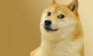 Create meme: doge meme , dog dogs meme, doge