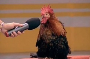 Create meme: Rooster forgot to ask