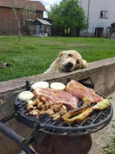 Создать мем: funny animals, bbq, cute dog