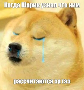 Create meme: doge meme , photo doge dog, doge is crying