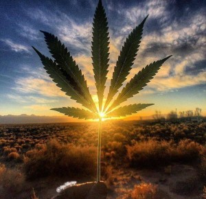 Создать мем: cannabis, sunrise, weed