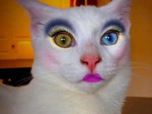 Create meme: painted Sphynx cat photos, funny cats with makeup, cat