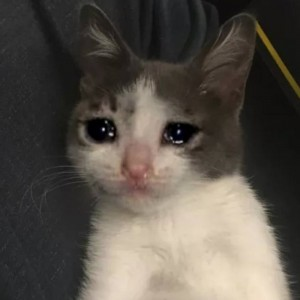 Create meme: crying cat meme, the cat is crying, cat