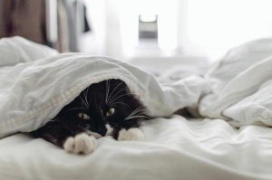 Создать мем: the cat is lying in the bed, cat on the blanket, cat with mattress