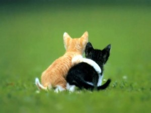 Create meme: funny animals , two cats, cute animals