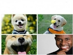 Создать мем: dog smile, dog meme, dog lover
