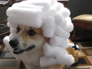 Create meme: Two thousand seventeen , animals , dog in a white wig