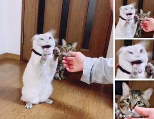 Create meme: hilarious pictures with animals, cat from meme 2018, cat