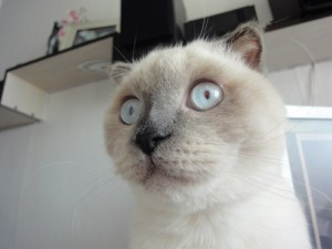 Create meme: The surprised cat