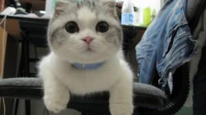 Создать мем: Cat meow meow