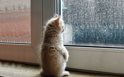 Image result for rainy cat images