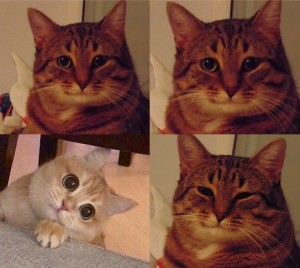 Create meme: cat , Cat , cat meme