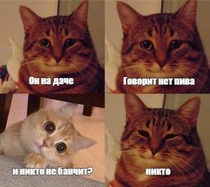 Создать мем: мемчики с котами, мемы с котами, мем кошка