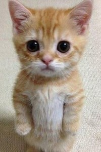 Create meme: animals funny , pictures do not be angry at me please honey, kitties