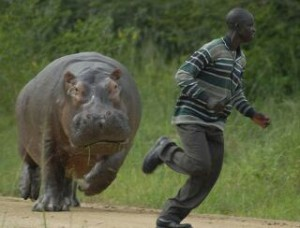 Create meme: The hippopotamus chases the negro
