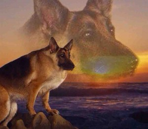 Create meme: German shepherd , dog shepherd, dog