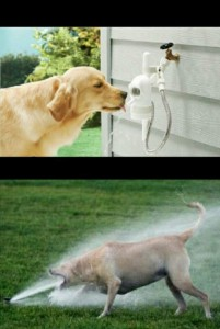 Create meme: funny pictures, funny animals , thirsty