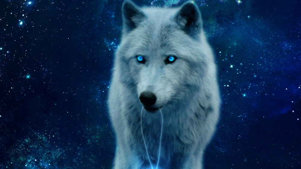 Create Meme Ice Wolves Blue Wolf Wallpaper Wolf Pictures Meme Arsenal Com