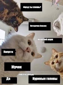 Создать мем: обнуление мемы, котики и наташа мемы, юмор