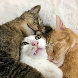 Create meme: cats , cat , cats sleeping together