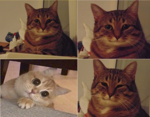 Create meme: meme cat , memes cat, memes with cats