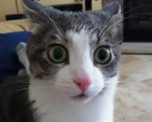 Создать мем: ъоъ кот мем, кот, кот мем